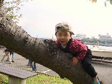 木登りdan