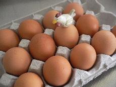 卵ごはん2