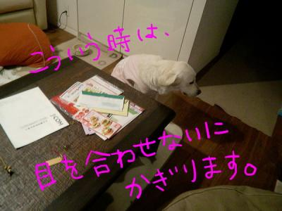 CIMG9447.jpg