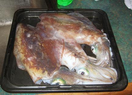 squid5.jpg
