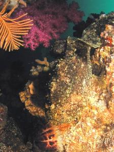 iop giant frogfish with voice 08-1