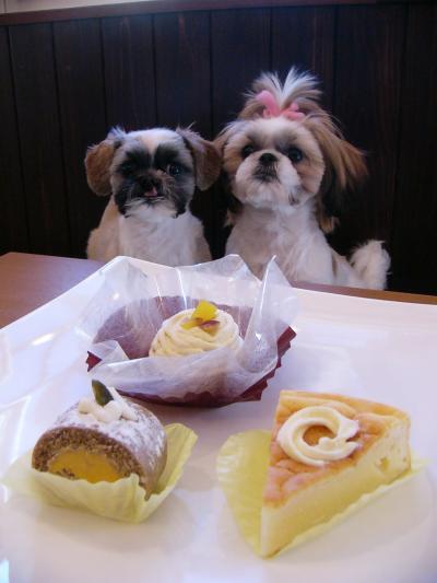 きなちゃん&がんちゃんの大好物ワンコケーキ♡