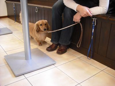 飼い主さんの足元にチョコンとかくれてます♡