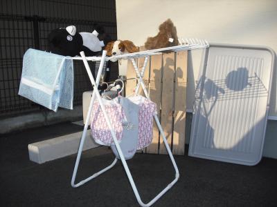 お天気の良い日は洗濯の日♡