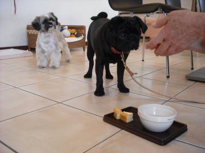 今日も大好きなワンちゃん用チーズケーキを完食♡