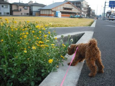 大好きなお散歩へ行ってきます♪