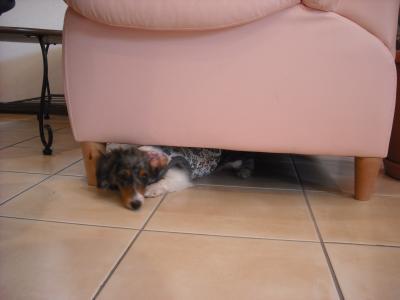 ソファーの下がお気に入りのティアラちゃん♡