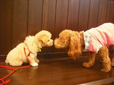 「ぷうちゃん」と「リンちゃん」初対面♡