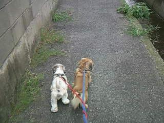 2人仲良くお散歩です♪