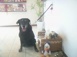 我が家の愛犬♡