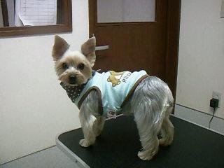 見返り美犬!?の「テンちゃん♡」