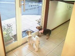 看板犬2人で待ってます♪