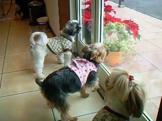 みんなそろって、お外を眺めてます♪