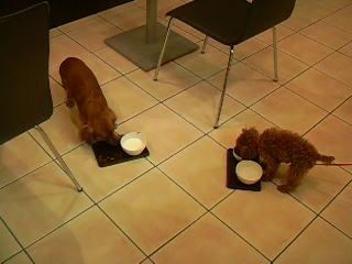 2人そろってお食事タイム♡