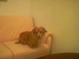 ソファーでのんびり♪のララちゃん♡