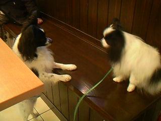 同じ犬種で仲良くなるといいな♪♪