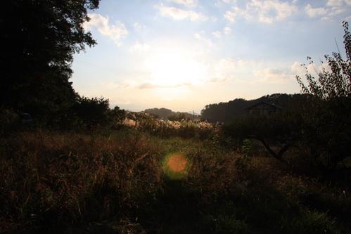 ランの周りの風景2
