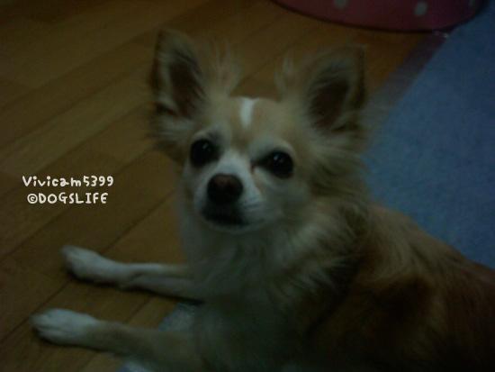 20080822(2).jpg