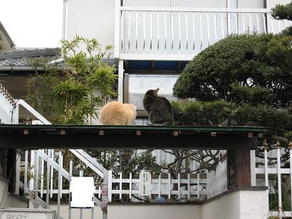 猫カップル2
