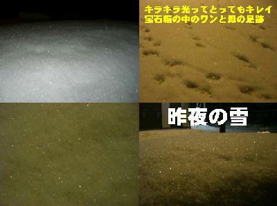 1/31の雪