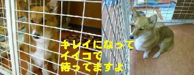 わんこ村3
