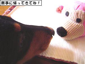 20090404-3.jpg
