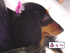 20090420-1.jpg