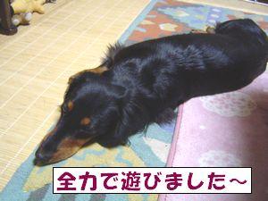 20090429-7.jpg