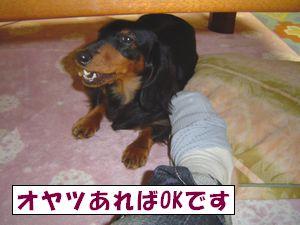20090514-5.jpg