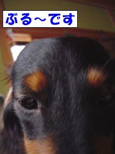 20090523-1.jpg