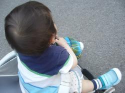 20090522フクちゃん1歳2ヶ月