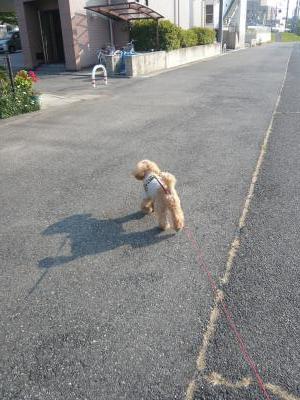 ちゃおの影