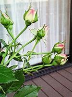 NEC_0103_20080514210350.jpg