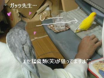 エセ猛禽類