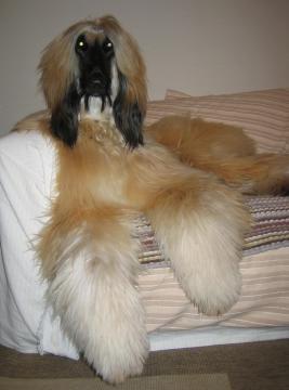 Little GAUDI 2006-12