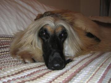 Little GAUDI 2006-14