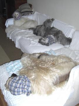 TripleAfs2009Apr