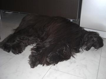 Orphee2009jan