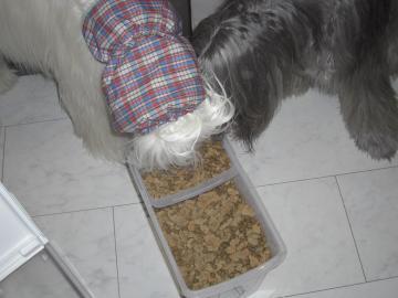 盗み食い2009Fev