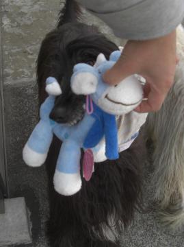 Orphee2009janおもちゃ大好き