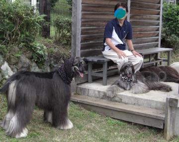 Leon&Ell in Odawara2008.09