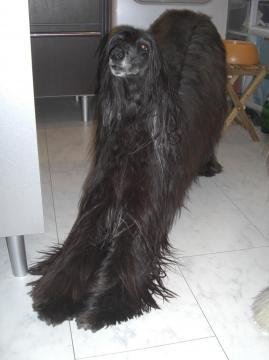Orpheeshampoo2009jan2