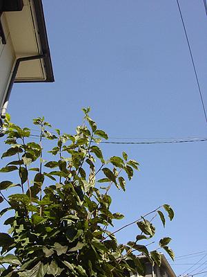 2006.10.9秋の空