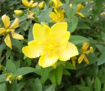 道路脇の花②