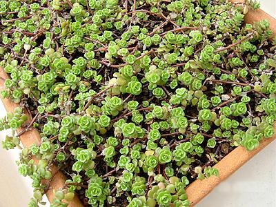可愛い植物
