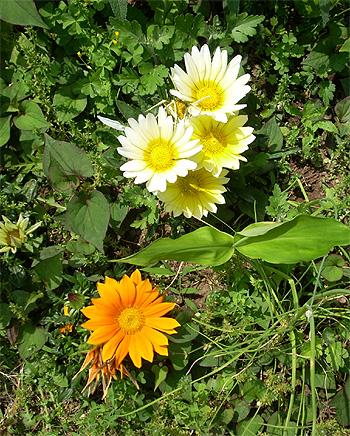 庭の花5輪