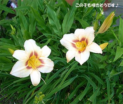 20070612:庭の花