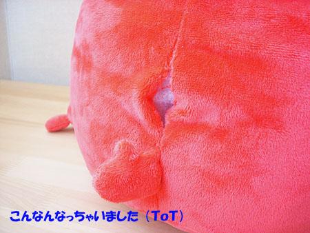 20071103りんちゃん②