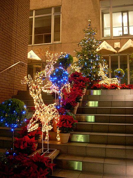 20071115クリスマスイルミネーション