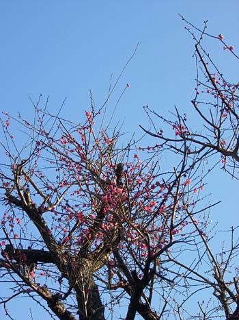 20080214空と花